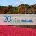 cranberry bog during harvest; 20 Minute Tuesdays logo